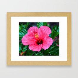 Aloha Hibiscus Framed Art Print