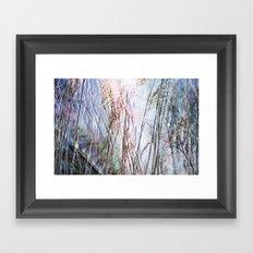 Magical Reeds - JUSTART (c) Framed Art Print