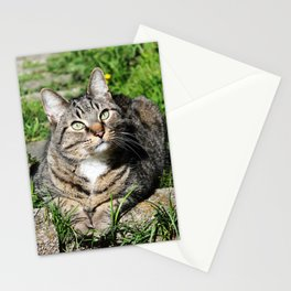 Thinking Cat in Sunlight Portrait Photography Stationery Cards
