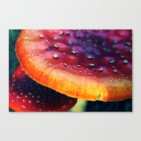 mushrooms Canvas Prints featuring mushrooms by JoanaRosaC