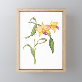 Flowering yellow cattleya orchid plant Framed Mini Art Print