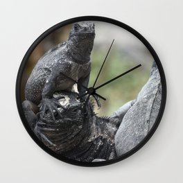 Funny animals - two marine iguanas in the Galapagos Wall Clock