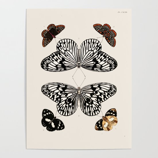 Vintage Butterfly Chart I Poster by fineearthprints | Society6  Vintage Butterfly Chart