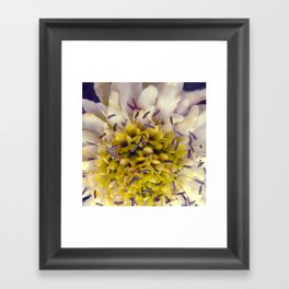 Flower Purple Yellow Framed Art Print