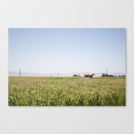 Central Valley Canvas Print