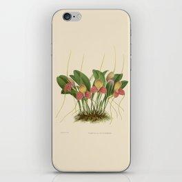 File:R. Warner & B.S. Williams - The Orchid Album - vol 01 - plate 005 iPhone Skin