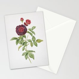 Vintage One Hundred Leaved Rose Stationery Cards