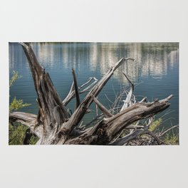 Tree Stump on the Northern Shore of Jackson Lake at Grand Teton National Park Rug