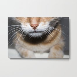 Muzzle with the mustache of a red cat Metal Print
