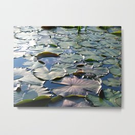 Sea of Lilypads Metal Print