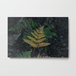 Moody Fern in Santa Cruz Forest Metal Print