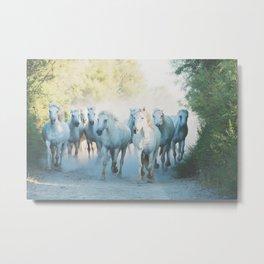 Camargue Horses ... Metal Print