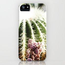 Cactus in the Sunlight iPhone Case