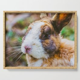 Rabbit in a natural park on the French Riviera Serving Tray