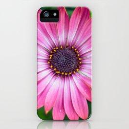 Flower Portrait - Pink Sunshine iPhone Case