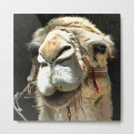 Haughty Camel Metal Print