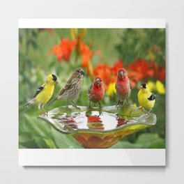 The most beautiful birds in the world Metal Print
