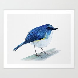 Red-Flanked Bluetail Watercolor Bird Art Print