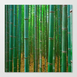 BAMBOO FOREST1 Canvas Print