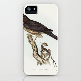 West Australian Goshawk (Astur cruentus) illustrated by Elizabeth Gould (1804–1841) for John Gould's iPhone Case