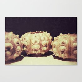 The Urchins Canvas Print