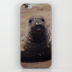 elephant seal pup iPhone & iPod Skin