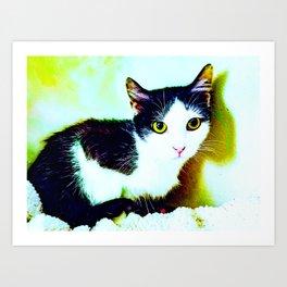 Black and white Piebald Cat, Chicken Art Print
