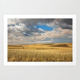 Iowa in November - Golden Corn Field in Autumn Art Print