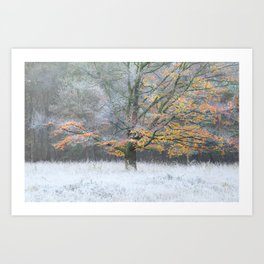 When the fall meets winter Art Print