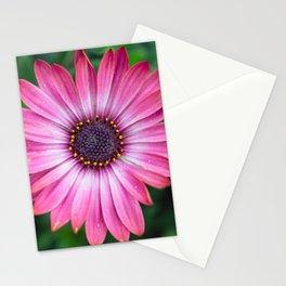 Flower Portrait - Pink Sunshine Stationery Cards