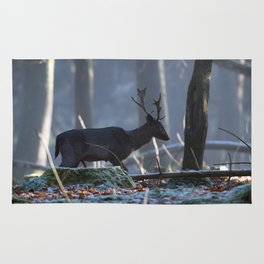 Dark fallow deer walking in misty forest. Rug