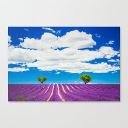 Provence lavender field in Valensole, France. Canvas Print