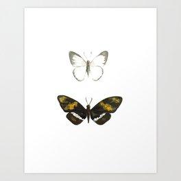Two Butterflies - Nature Study #3 Art Print