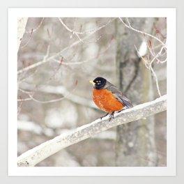 Bird Art, Robin Photograph, Robin Picture, Woodland Decor, Home Decor, Forest, White, Nature Photogr Art Print