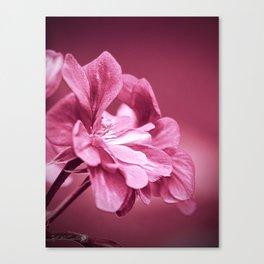 Ivy Geranium named Contessa Purple Bicolor Canvas Print