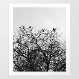 A murder of crows sitting in a tree Art Print