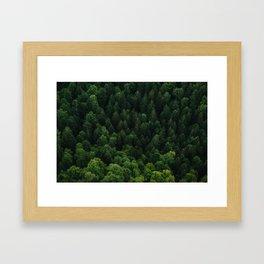 Swiss forest Framed Art Print