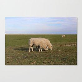 Grasende Schafe auf Nordseeinsel Pellworm / Grazing Sheep on green Field Canvas Print