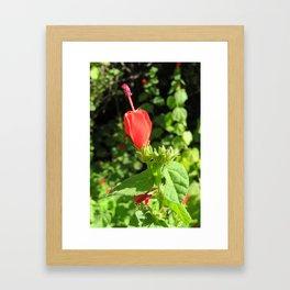Arboretum Flower- Color Framed Art Print