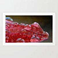 Water Droplets Art Print