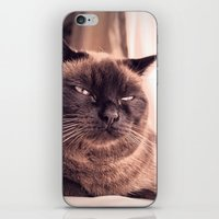 cookie iPhone & iPod Skins featuring Cookie by Rachel's Pet Portraits