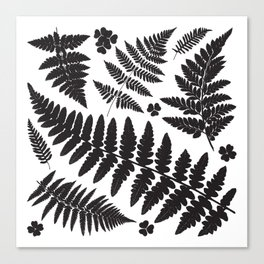 Black and White Ferns Canvas Print
