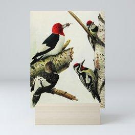 Vintage Print - Red-Headed Woodpecker & Yellow-Bellied Sapsucker, from Birds of New York (1914) Mini Art Print