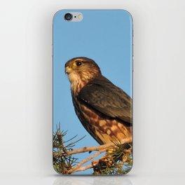 Merlin in Evening Light iPhone Skin
