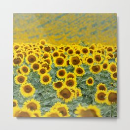 Sunflower Mile Metal Print