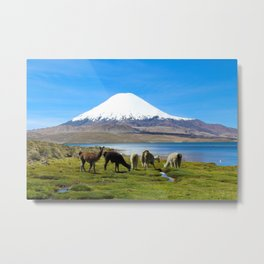 Chungara Lake, Chile Metal Print