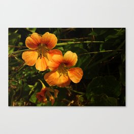 Flare Fire Canvas Print