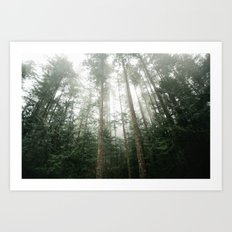 Trees in Olympic National Park  Art Print
