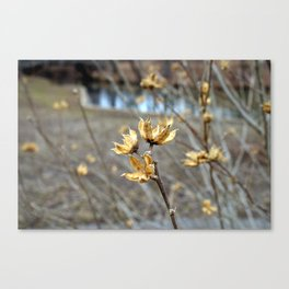Flowers in the Winter Canvas Print