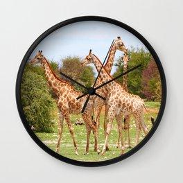 Giraffe family, Africa wildlife Wall Clock
